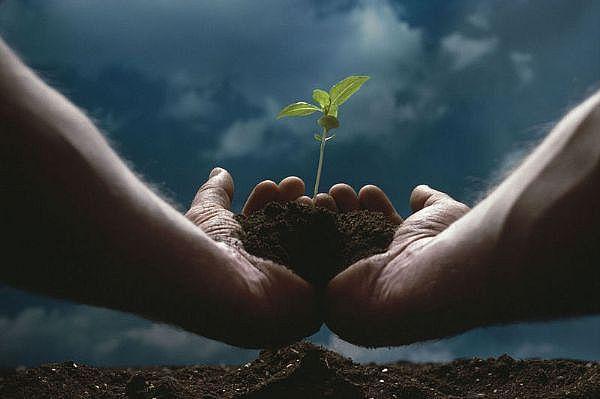 El PLaneta vivo la vida en el planeta tierra empieza por las plantas que producen el oxigeno